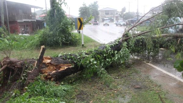 ระทึก!ฝนตกหนัก-พายุพัดซ้ำ ต้นสักและกระถินยักษ์ริมถนนเชียงราย โค่นทับรถตู้ นร.