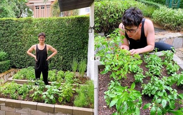 """ปลอดสารพิษทุกต้น!! """"ซี ศิวัฒน์"""" เนรมิตพื้นที่บ้าน ปลูกผักสวนครัวกินเอง"""