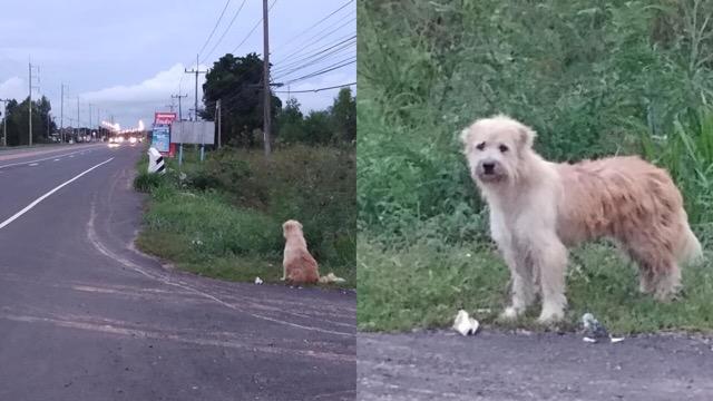 เสทือนใจคนรักหมา! หมาถูกทิ้งข้างถนน รอเจ้าของถึง 2 ปี ไม่ไปไหน