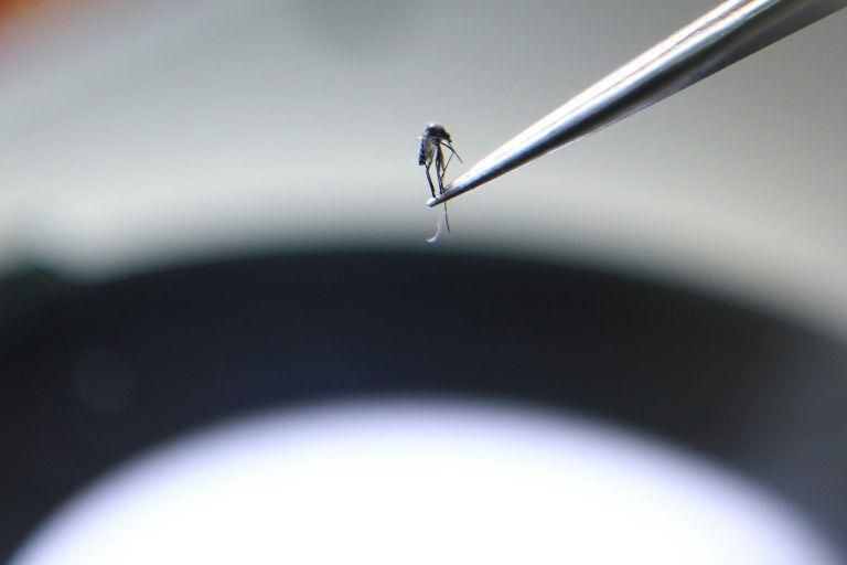 นำร่องใช้เทคโนโลยีจากอวกาศที่เคยใช้คาดการ์ณไฟป่าในสหรัฐฯ มาใช้พยากรณ์การระบาดของมาลาเรียในพม่า (AFP Photo/Nhac NGUYEN)