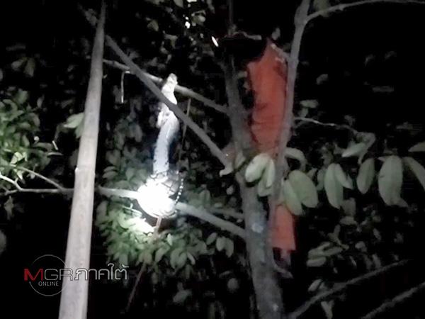 แจ้งกู้ภัยนาทวีจับงูเหลือมแอบมากินไก่ก่อนเลื้อยหลบขึ้นต้นไม้