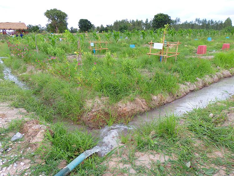 น้ำที่ถูกสูบจากธนาคารน้ำใต้ดิน ส่งไปยังพื้นที่ทำการเกษตร