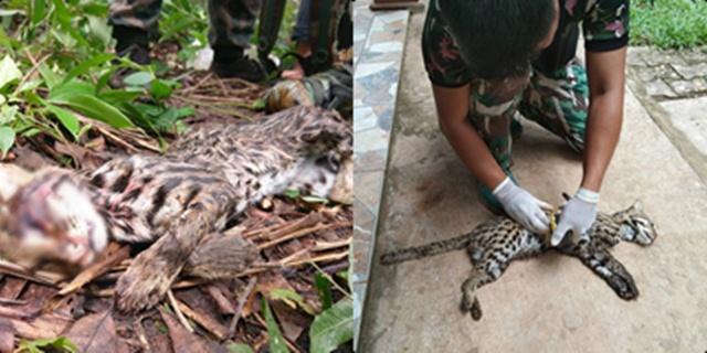 สลด! ซากแมวดาว เหยื่อพรานโหดถูกยิงตายในเขตรักษาพันธุ์สัตว์ป่าห้วยศาลา