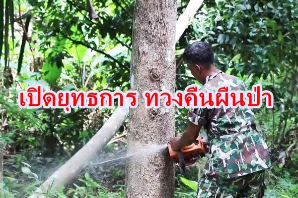 ชุมพรสนธิกำลังเปิดยุทธการยึดคืนผืนป่า ตัดทำลายต้นยางพารา -ผลไม้