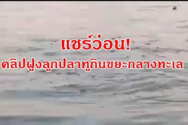 แชร์ว่อน! คลิปฝูงลูกปลาทูกินขยะไมโครพลาสติกกลางทะเลเกาะไหง จ.กระบี่