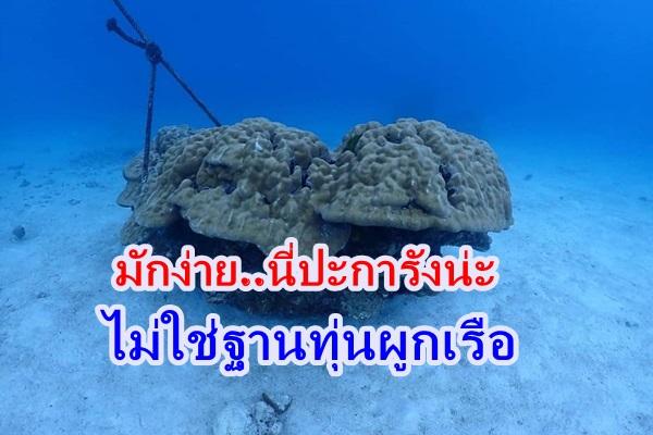 มักง่าย ! เรือท่องเที่ยวทุบหม้อข้าวตัวเอง ใช้ปะการังผูกทุนเรือเสียหายยับ