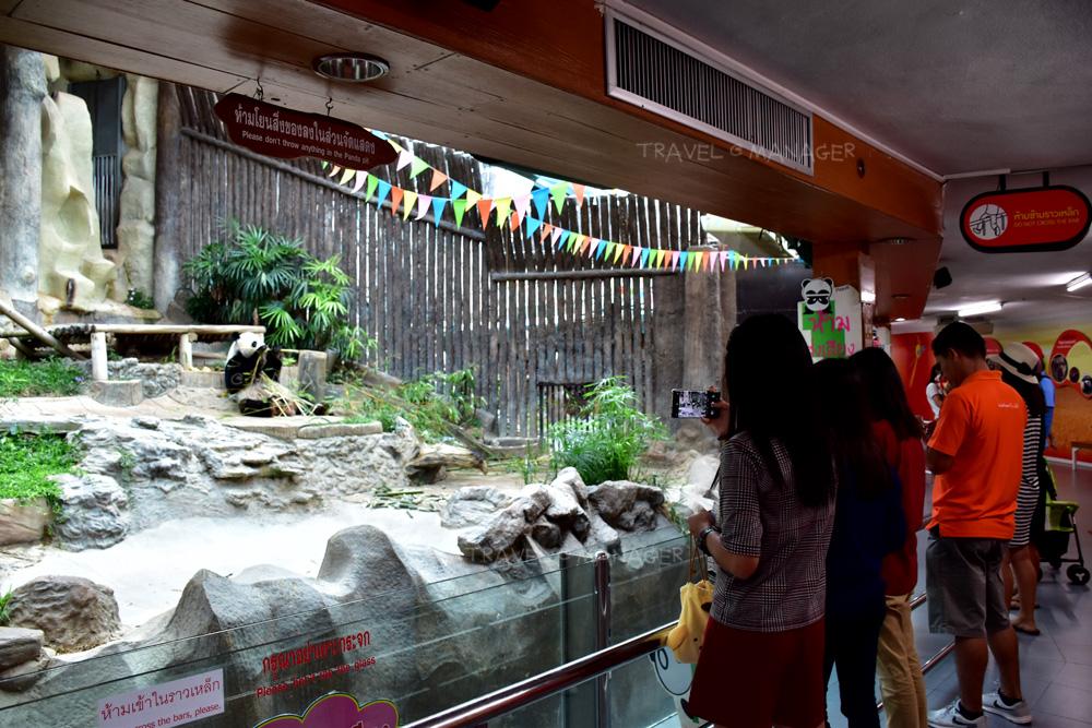 ส่วนจัดแสดงแพนด้า สวนสัตว์เชียงใหม่