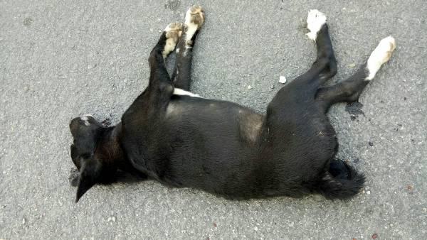 อนาจแท้!คนใจร้ายยิงแอบทิ้งหมาริมถนนหน้าวัดดังลำปาง จนถูกรถชนตายไม่เว้นวัน
