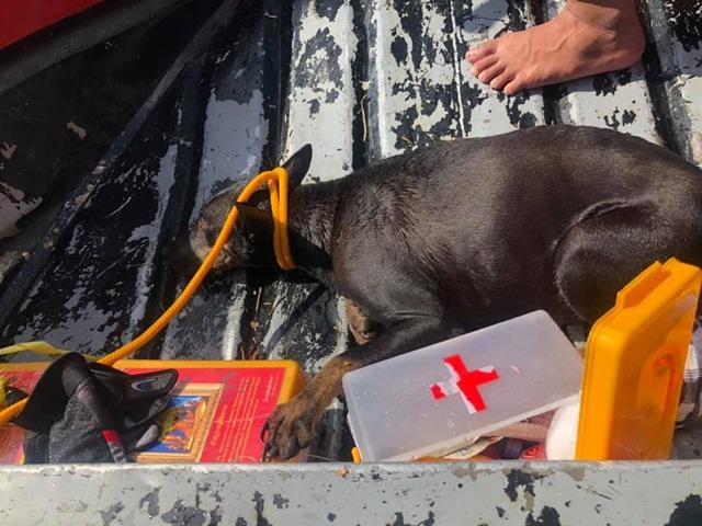 """""""ก้อง ห้วยไร่"""" ช่วยสุนัขท้องแก่ ขณะน้ำท่วมสูงกว่า 3 เมตรได้อย่างปลอดภัย (ชมคลิป)"""