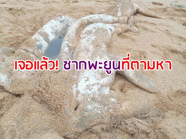 เจอซากพะยูนเกยหาดเกาะลิบง คาดเป็นตัวที่กำลังตามหาหลังพบเมื่อ 4 วันก่อน