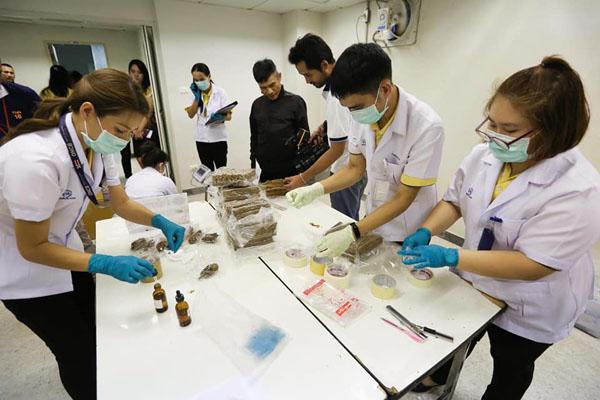 ป.ป.ส.พร้อมมอบกัญชากว่า 3 พันกก.ให้หน่วยงานที่ได้รับอนุญาต เพื่อประโยชน์ทางการแพทย์
