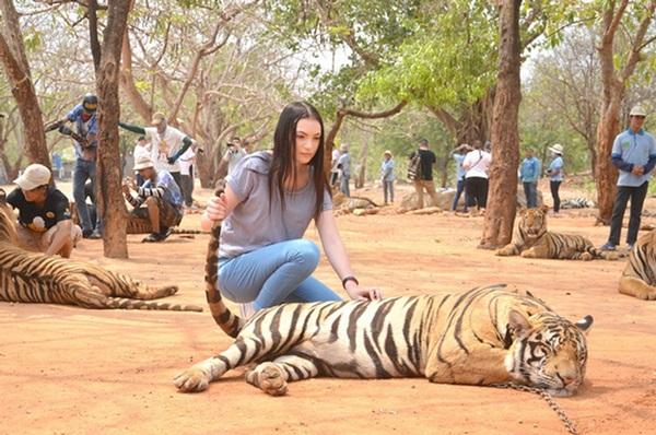 แนะกรมอุทยาน ฯ ใช้หลักรัฐศาสตร์หาทางออกร่วมกันกับวัด เพื่อเสือมีชีวิตต่อ