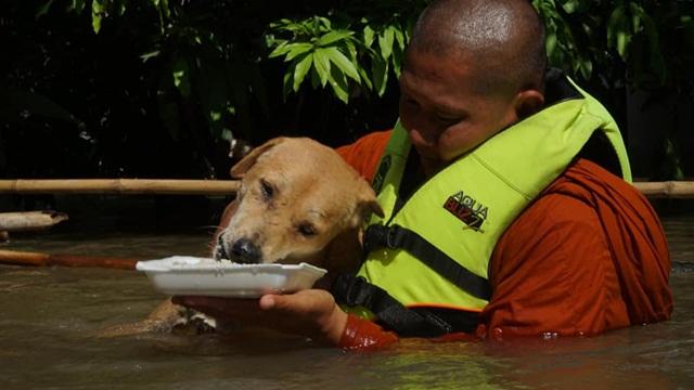ชื่นชมพระสงฆ์! ลุยน้ำท่วมป้อนอาหารสุนัข ย้ำ ทุกชีวิตล้วนมีค่า