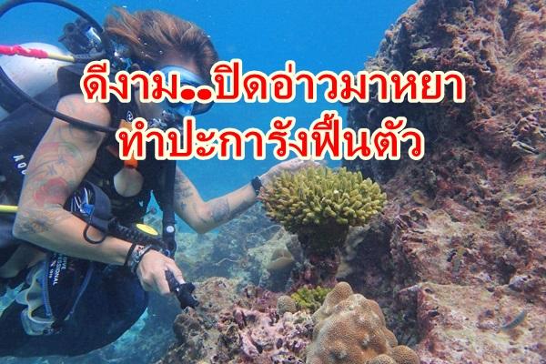 ดีงาม..ปิดอ่าวมาหยา หมู่เกาะพีพี จ.กระบี่ กว่า 1 ปี พบปะการังฟื้นตัว