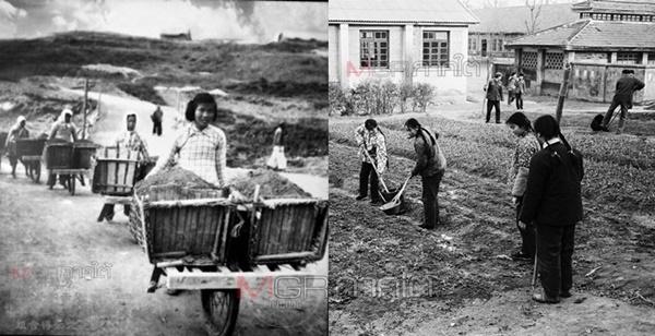"""""""เรียนรู้กสิกรรมและวิถีชาวนา"""" คือการงานของนักเรียนจีนในยุคก้าวกระโดดและปฏิวัติวัฒนธรรม"""