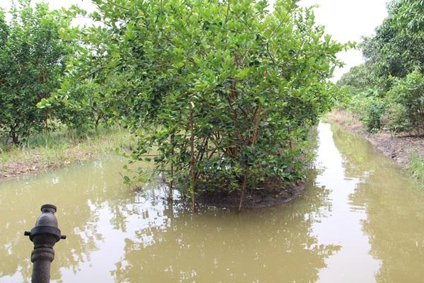 นาข้าว-พืชผัก จมน้ำกว่าหมื่นไร่ หลังฝนตกหนักติดต่อกันในพื้นที่ อำเภอปากท่อ
