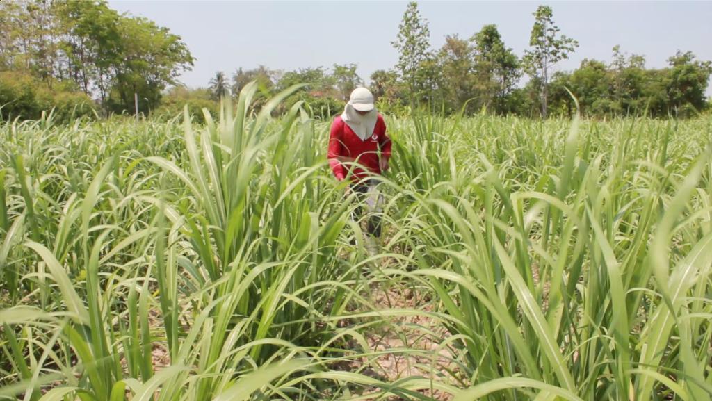 ที่ปรึกษาสถาบันวิจัยและพัฒนา ม.เกษตรฯ ออกโรงชี้แจงกรณีสารทดแทน พาราควอต