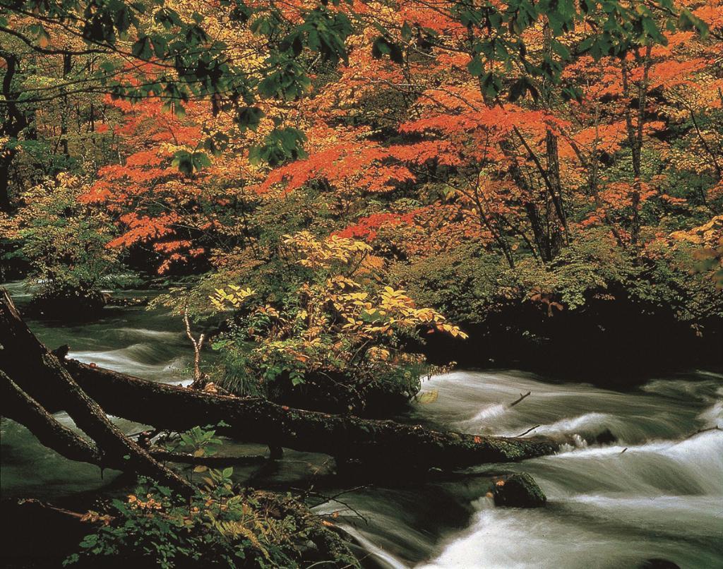 """6 จุดชมใบไม้เปลี่ยนสีที่ """"โทโฮคุ"""" ธรรมชาติเนรมิต งดงามราวภาพฝัน"""
