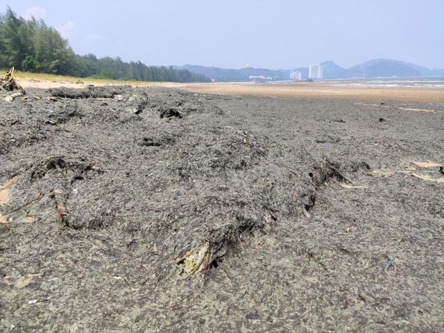 หาดวนอุทยานปราณบุรี กลายเป็นสีดำ นักท่องเที่ยว ไม่กล้าลงเล่นน้ำ