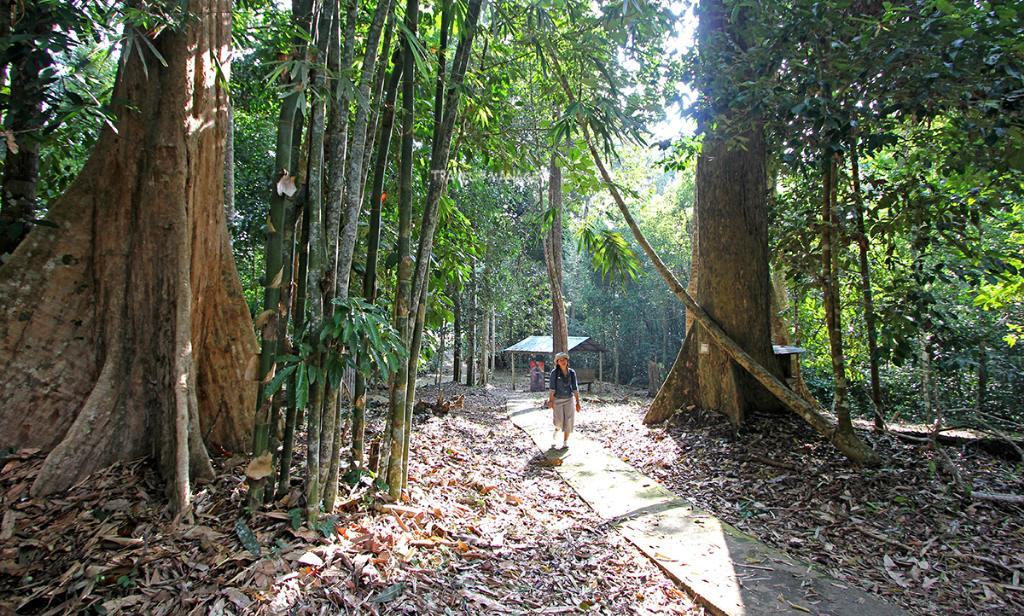เส้นทางเดินป่าตามรอยนักสู้สู่ต้นไม้ยักษ์