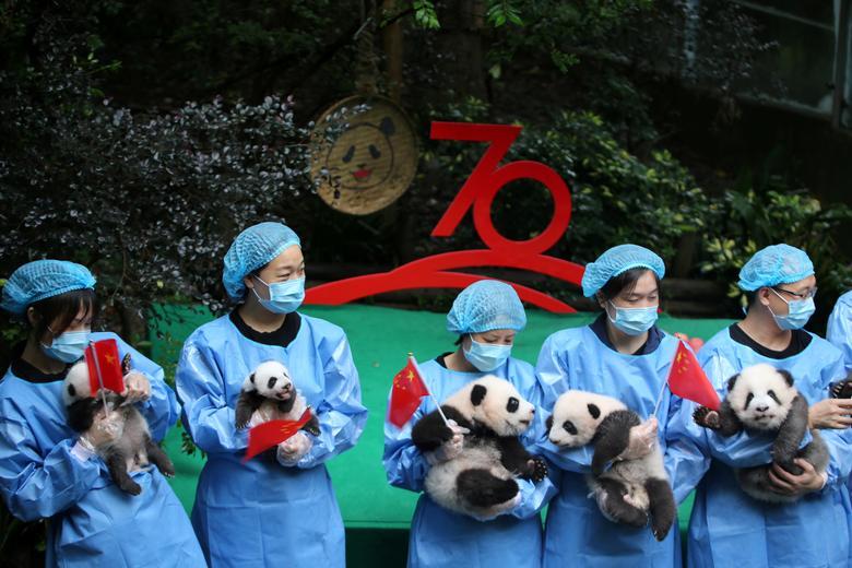 เจ้าหน้าที่ช่วยกันอุ้มลูกแพนด้าที่เกิดในปี 2019 เพื่อถ่ายรูปร่วมกันในโอกาสครบรอบ 70 ปีของการก่อตั้งสาธารณรัฐประชาชนจีน