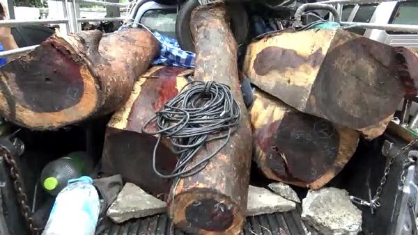 รวบแก๊งมอดไม้ลอบตัดไม้พะยูงในพื้นที่ จ.ชลบุรี ค่ากว่า 5 ล้านบาท