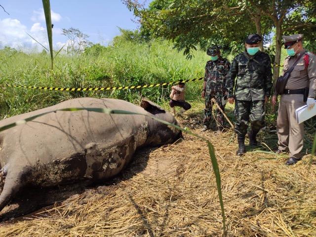 ตายอีกแล้ว!!! ช้างป่าละอู เจ้าหน้าที่ หลายหน่วยงานลงพื้นที่ ตรวจสอบ