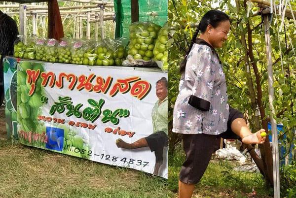 """""""พุทราส้นตีน""""มีจริ๊ง! ไม่หยาบคาย ผลผลิตของเกษตรกรหญิงแกร่งพิการแขนสู้ชีวิตชาววังน้ำเขียว"""