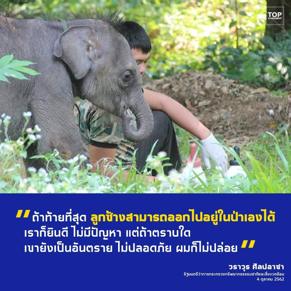 """รมว.ทส. ระงับการปล่อยลูกช้างป่า """"ชบาแก้ว"""" ย้ำการดูแลลูกช้างให้แข็งแรง"""
