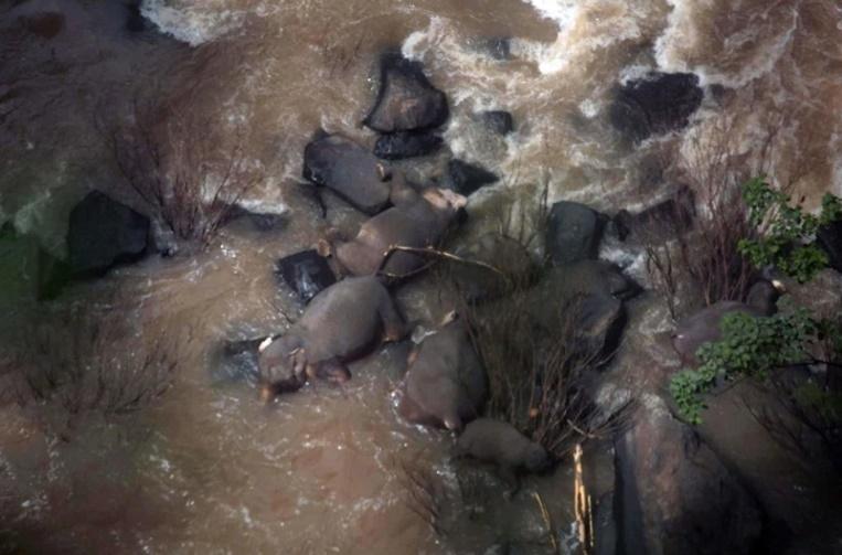 """InPics&Clip: น้ำตาซึมสื่อนอกรายงาน ช้างป่าไทย 6 ตัวดับคา """"น้ำตกเหวนรก"""" หลังทั้งฝูงพยายามช่วยชีวิตลูกช้าง"""