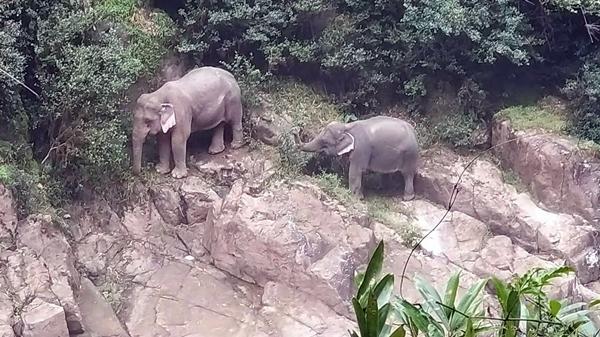 สุดสลด! คลิป 2 ช้างป่า พลัดตกน้ำตกเหวนรก รอความช่วยเหลือ