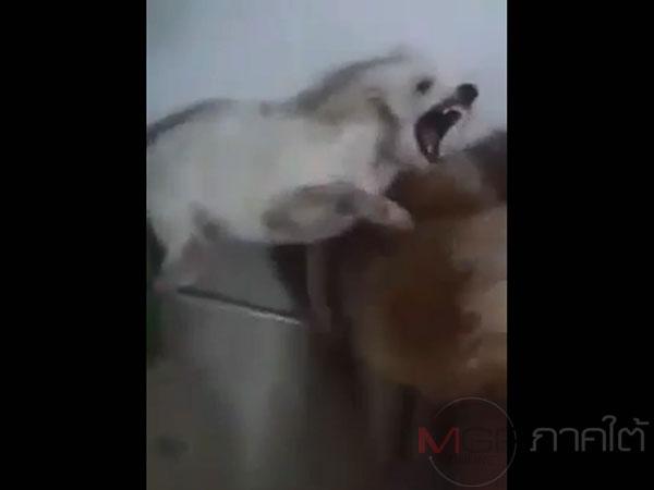 คนรักสัตว์สะเทือนใจ! เผยคลิปหญิงสาวลงมือตี 2 พุดเดิ้ลจนร้องลั่นบ้าน
