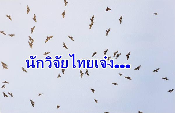 เจ๋ง ! นักวิจัยไทยใช้เครื่องส่งสัญญาณพลังแสงอาทิตย์ติดตามเหยี่ยวอพยพ