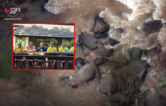 สลด! พบซากช้างตกเหวนรกเพิ่มอีก 5 ตัว รวม 11 ตัว เชื่อเป็นการสูญเสียครั้งใหญ่