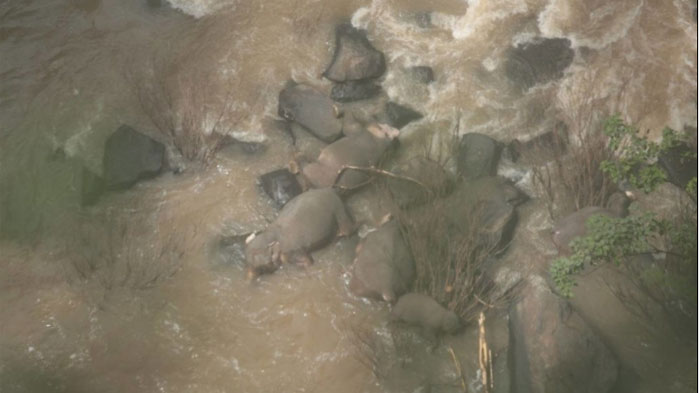 รองนายกฯ เสียใจช้างป่าตกเหว-ถูกยิงตาย เร่งประสาน ทส.หาทางแก้