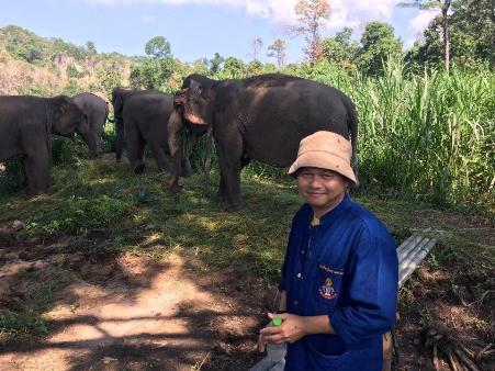 ประทับใจทั้งบาง!เปิดพื้นที่ลับสถาบันคชบาลลำปาง ส่องวิถีช้างบ้านโขลงใหญ่จากพิษณุโลกกลางป่า อ.อ.ป.