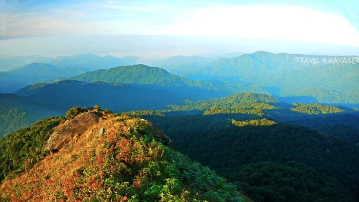 ผืนป่าอันอุดมสมบูรณ์รอบบริเวณยอดเขาโมโกจู