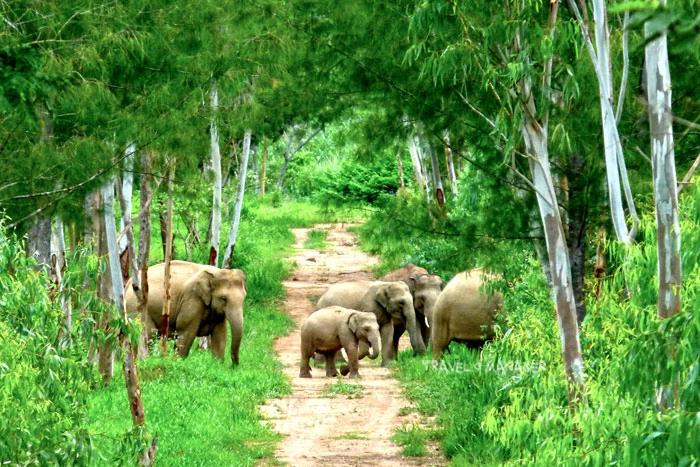 """""""กุยบุรีโมเดล""""...คน-ช้างป่า อยู่ร่วมกันได้ ใต้ร่มพระบารมี พ่อของแผ่นดิน"""