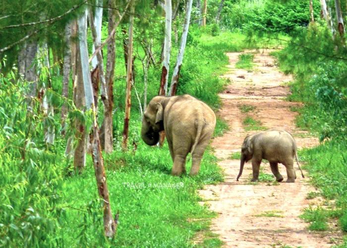 ช้างป่ากับลูกน้อย แห่งผืนป่ากุยบุรี