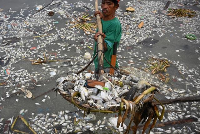 แรงงานคหนึ่งตักส่วนหนึ่งในซากปลาหลายพันตัวที่ถูกเกยฝั่งเกาะฟรีด้อมไอซ์แลนด์ในฟิลิปปินส์