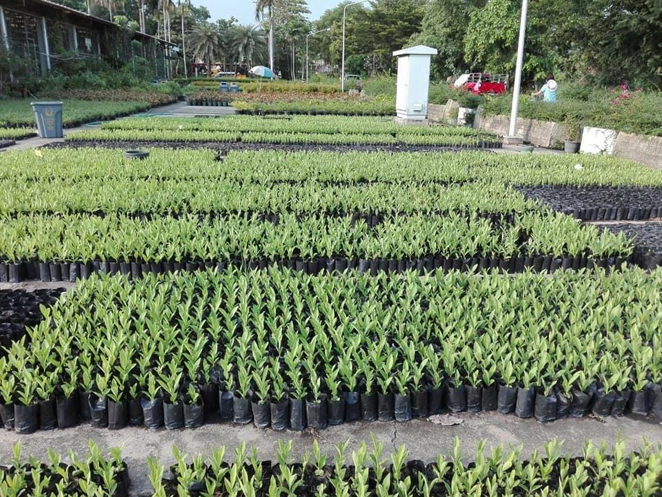 """""""อัศวิน"""" ชวนคนกรุง ร่วมเพาะไม้กล้า 1 ล้านต้น เพื่อช่วยดูดซับมลพิษ ฝุ่นPM2.5"""