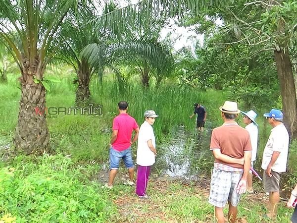 ชาวบ้านเดือดร้อนน้ำท่วมขังสวนยาง-ปาล์ม เหตุโครงการขุดคลองผันน้ำแม่น้ำตรังล่าช้า