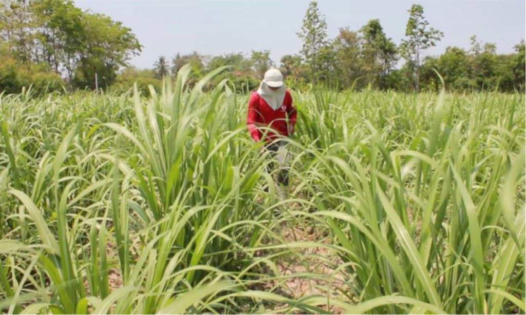 ล้มภาคเกษตร 5.7 แสนล้าน? หากล้มพาราควอต