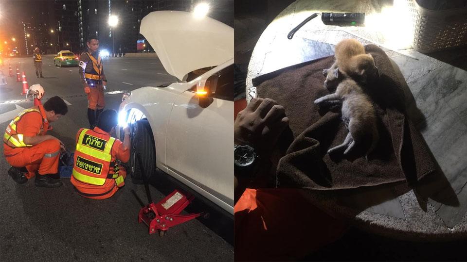 """สุดเศร้า! """"ลูกแมว"""" ติดใต้ห้องเครื่องรถยนต์ ตาย 1 เจ็บ 1 คนขับไม่รู้ตัว"""