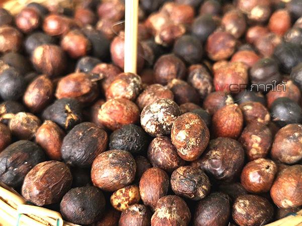 ชาวนาโยงรวมกลุ่มปลูกกาแฟเป็นอาชีพเสริม สร้างรายได้ให้อย่างงดงาม