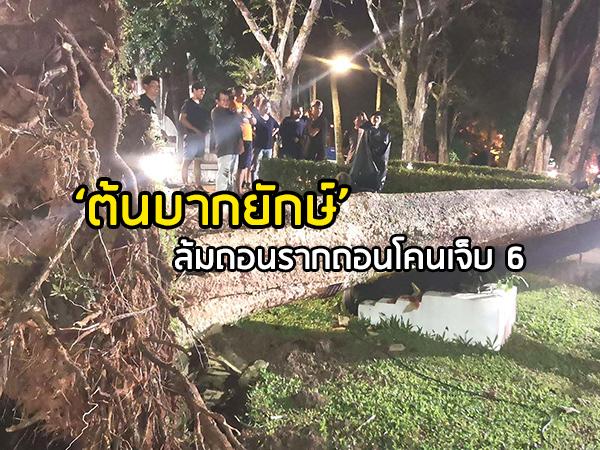 """ระทึก! """"ต้นบากยักษ์"""" ล้มในสวนสาธารณะอนุสาวรีย์พระยารัษฎาฯ ตรัง คนเจ็บ 6 ราย"""