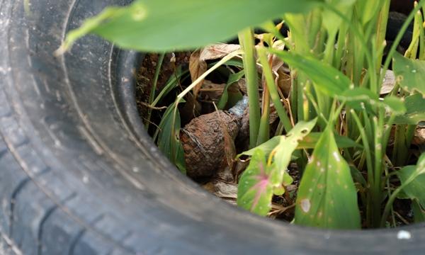 แทบช็อค!หนุ่มกัมพูชา พบระเบิดมือซุกในล้อรถยนต์เก่าหน้าห้องเช่าใน จ.ตราด