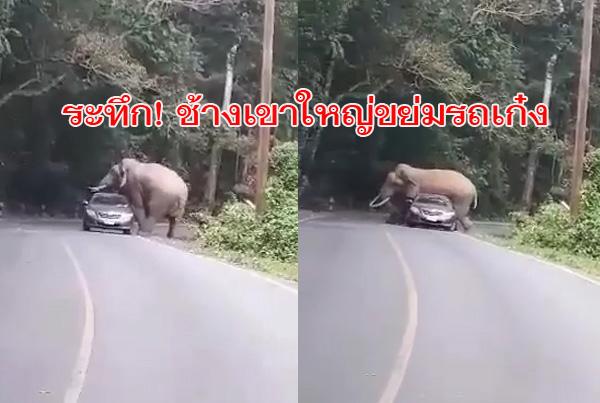 """คลิประทึก! """"พี่ดื้อ"""" ช้างป่าเขาใหญ่ ขึ้นค่อมขย่มเก๋งนักท่องเที่ยวรถพังหลังคายุบ รอดตายหวุดหวิด"""