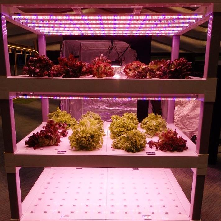 นวัตกรรมหลอด LED สำหรับปลูกผัก