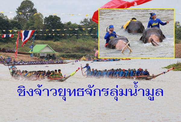 นักท่องเที่ยวนับหมื่น แห่ชมแข่งเรือยาวชิงจ้าวยุทธจักรลุ่มน้ำมูลและสีสันแข่งช้างว่ายน้ำ